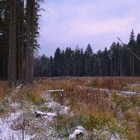 первый снег в лесу. :: Victor