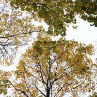 Это кружево осень сплела :: София
