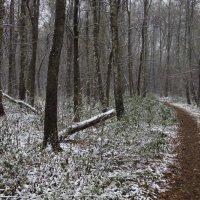 Первый снег всегда в радость :: Андрей Лукьянов