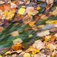 Осенний ручеёк :: Юрий Спасенников