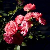 Цветы - в них всё! :: Сергей Щербаков