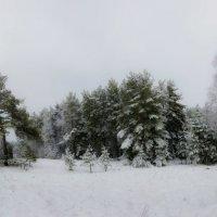 Зимний лес. :: Sven Rok