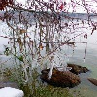 Ледяные узоры :: Светлана Игнатьева