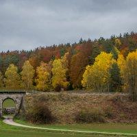 Пасмурная осень :: Waldemar .
