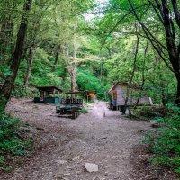 Однажды в лесу :: Юрий Бичеров