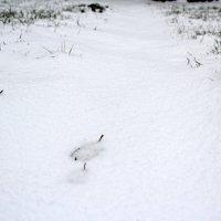 Первого снега всё больше и больше :: Катя Бокова