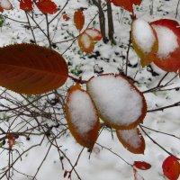 Помню, больше всего в детстве радовал первый снег :: Андрей Лукьянов
