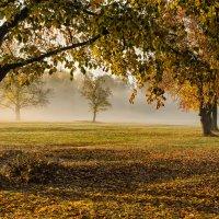 Осень на Андреевском лугу :: Лариса Березуцкая