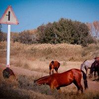 Кони у дороги :: Лариса Димитрова