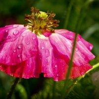 после дождя :: Наталья Сорокина