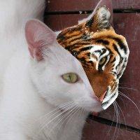 Кошечка-тигрица отмечает Хэллоуин... :: Алекс Аро Аро