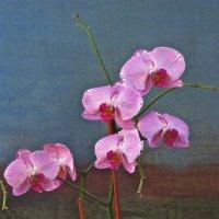 орхидеи :: НАТАЛЬЯ