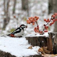 По первому снежку. :: Алексей .