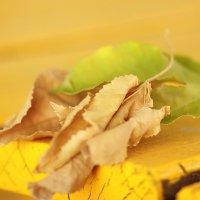 осень :: gennadi ren