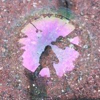 Любопытствующие в миниатюре или 1 секунда жизни мыльного пузыря :: Марина Marina
