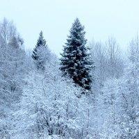 Новогодняя ель. :: Андрей Скорняков