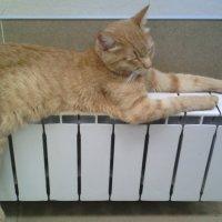 Котик согревался в Сбербанке :: марина ковшова
