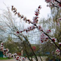 мгновения весны. :: Назар