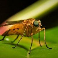 О чём думает муха!? :: Юрий Кольцов