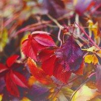 Осень.. :: Наталья Грикурова