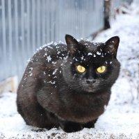 Вот и первый снег :: Татьяна