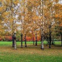 Золотая осень :: Виктор Позняков