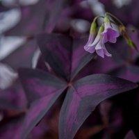 Фиолетовые краски :: Алена Демченко