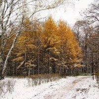 Осенняя зима :: Джулия К.