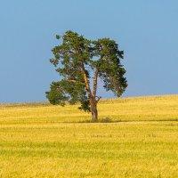Не забытое дерево :: Den Ermakov