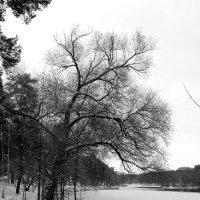 Поздняя осень :: Андрей Снегерёв