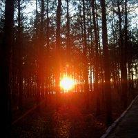 Солнце за лесом :: Татьяна Пальчикова