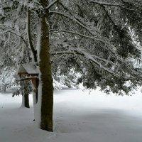 Снегопад 26.10.2016 :: Милешкин Владимир Алексеевич