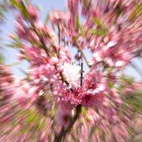 Цветы, Зуминг :: Alexander Dementev