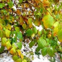 Осень встретилась с зимой :: Елена Семигина