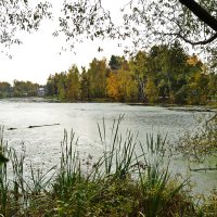 Осенний пруд :: Татьяна