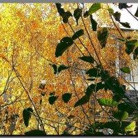 а за окном, осень   золотая ... :: Ivana