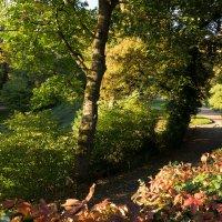 Ботанический парк в Вуппертале. :: Eleonora Mrz