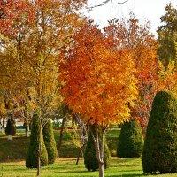 Осенние Ташкентские пейзажи :: Светлана