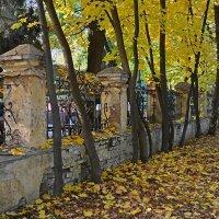 Осенняя позолота :: Сергей Тарабара
