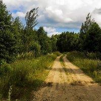 Дорога в лес :: Александр
