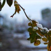 Или снег, или капель :: Юрий Гайворонский