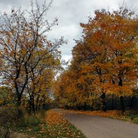 Осенний этюд :: Irina-77 Владимировна