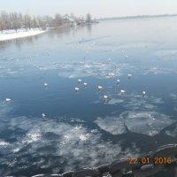 Птицы на льду :: Галина