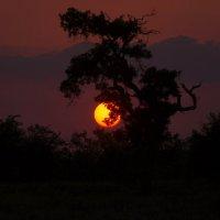 Закат в буше. ЮАР :: Serb