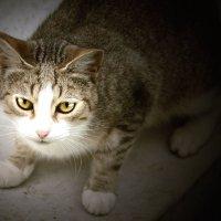просто уличный кот :: Наталия П