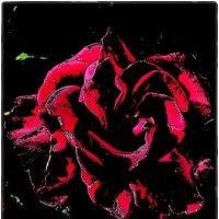 Пышная роза :: Нина Корешкова