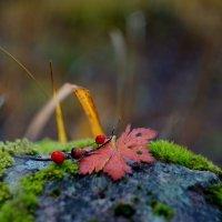 ..краски уходящей осени.. :: Ольга Cоломатина