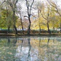 Осень в парке. Владикавказ. :: Andrad59 -----