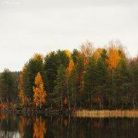 Осень :: Ксения Прикман