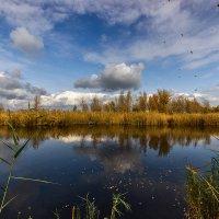 Листья закружат... :: Павел Петрович Тодоров
